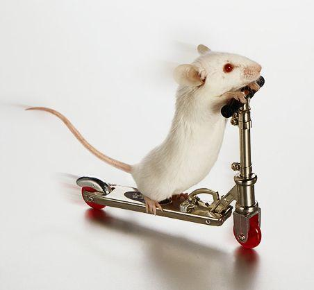 BALTĀĀS PELĪTEES  ierodas... Autors: augsina Jūs par zaķiem,mēs par pelēm.