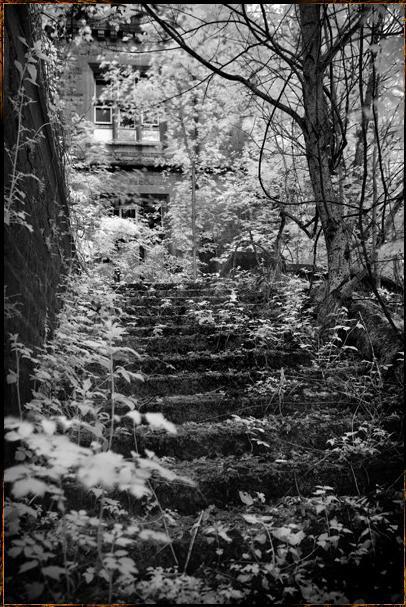 Ziedēšana Autors: LittleWolf Pamestā Château de Noisy (Miranda)