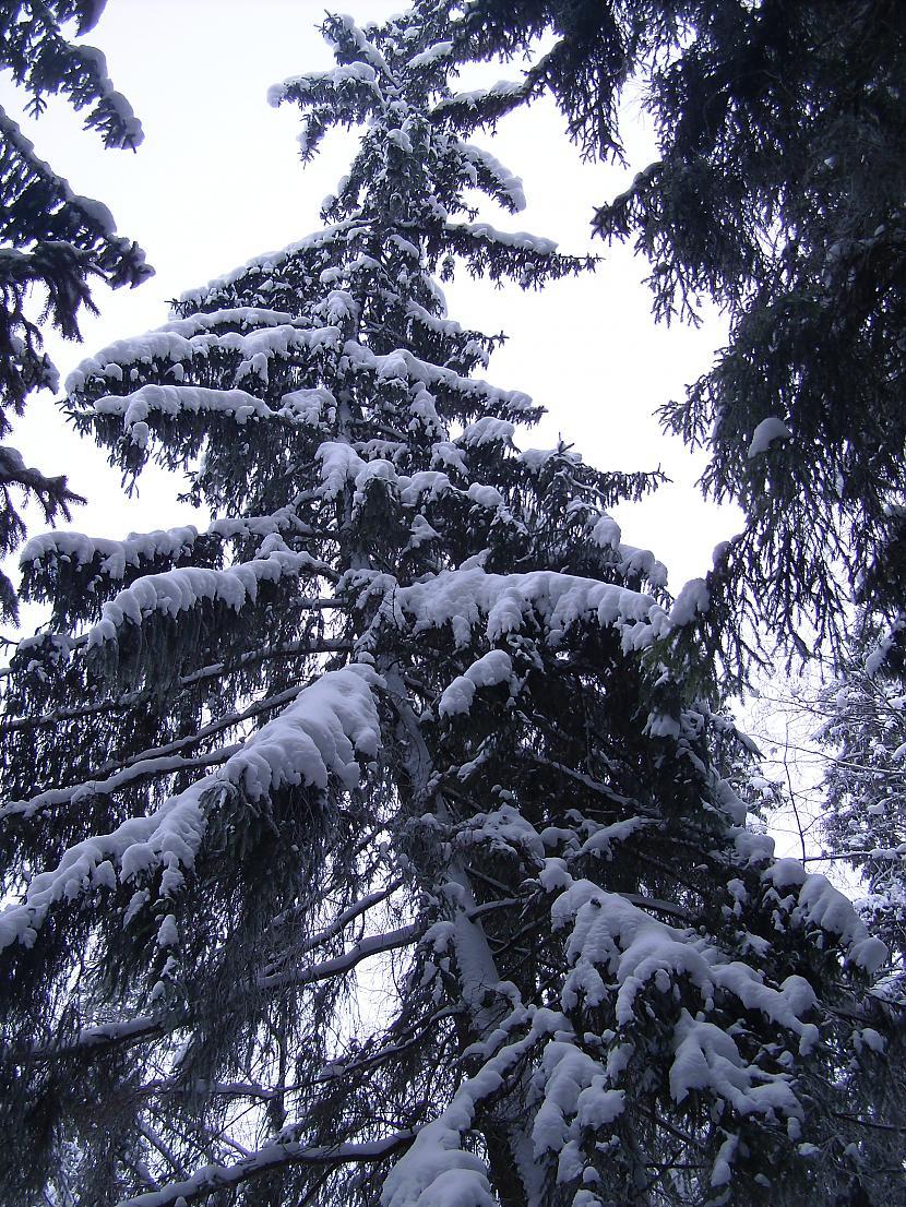 Autors: Sany21 Rauna ziemā