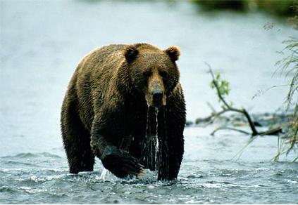 Lielākais sauszemes plēsējs ... Autors: kanba Pasaulē lielākie dzīvnieki.