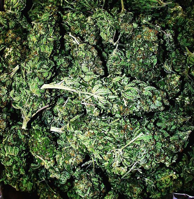 Zalite Autors: Fliperiso Fakti par marihuanu(atrasts interneta)