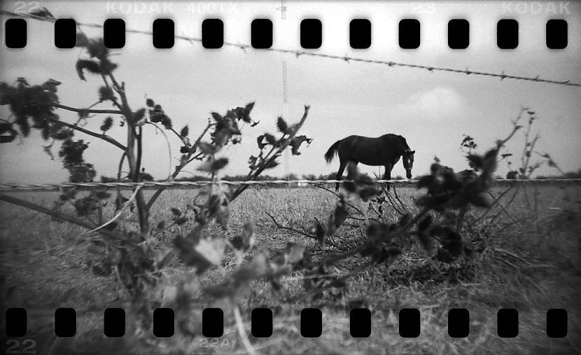 Teksasa tā apti Teksasas... Autors: KingOfTheSpokiLand 75 Pārsteidzošas dzīvnieku fotogrāfijas!