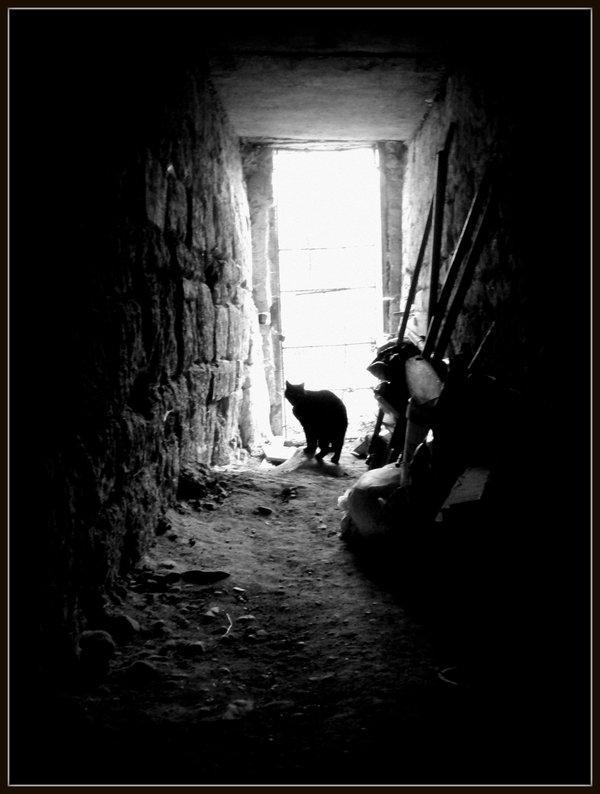 Biedējošas vietas Šoreiz neiet... Autors: Wicked Sick No kā Tu visvairāk baidies?