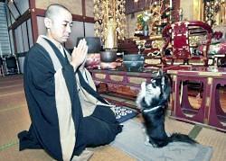 Autors: LKJH Čivava lūdzas dievu budistu templī