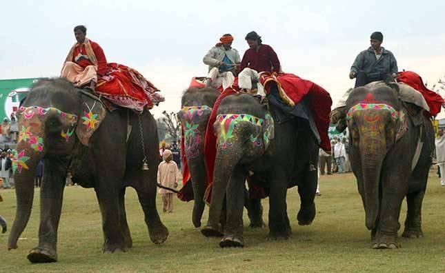 Ziloņu skriešanās sacensības Autors: pusniks Mini Olimpiskās spēles Indijā