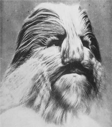 Lionel cilvēks ar lauvas seju... Autors: augsina Pasaules dīvainākie cilvēki.