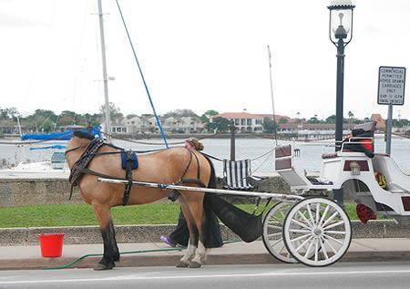 zirgs ir nolocijis kaklu tā ka... Autors: Laur1s tas nav photoshop