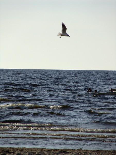 Autors: MollyDIAMOND Mūsu pašu jūrmala.