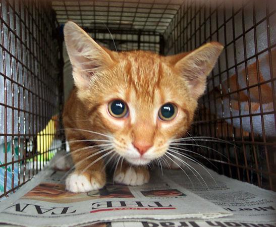 Kaķenei savas dzīves laikā var... Autors: Fosilija Fakti par kaķiem.