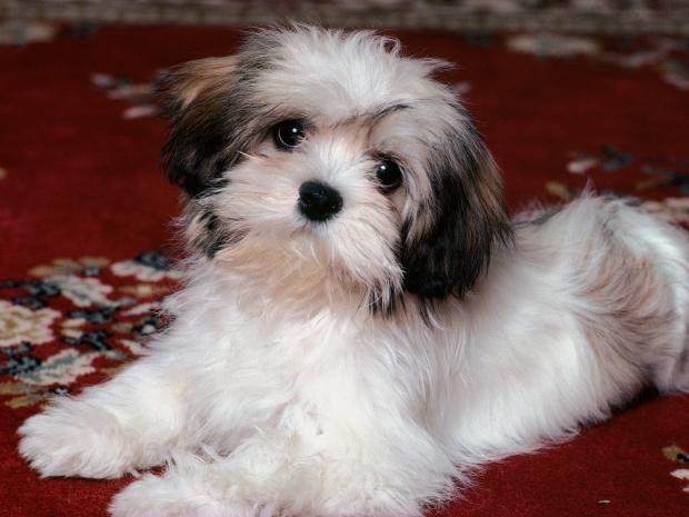 Suns dzird skaņu 250 jardu... Autors: Evuxi Fakti par suņiem.