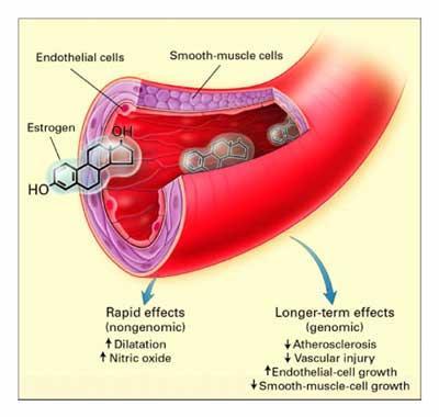 hormoni ir īpašas šūnu... Autors: Raitons skeletons Iz zinātnes