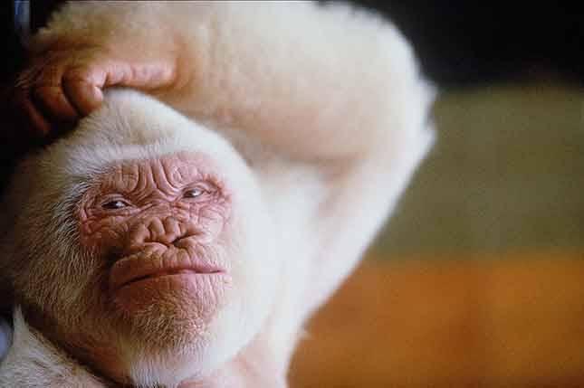 Autors: Skello Pasaules dīvainākie dzīvnieki.