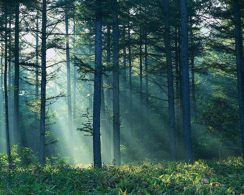 Nostājieties mežā galvā... Autors: zakjeens9 Pamācības, kā nodarīt sev pāri.