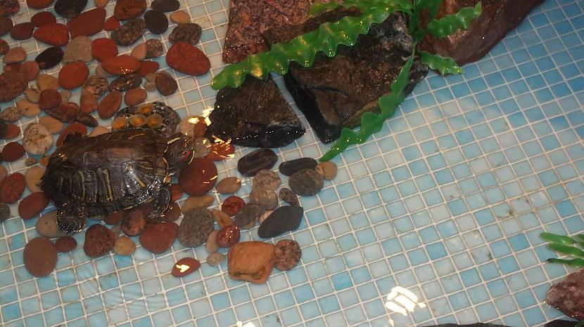 Autors: B320 Sodienas darbs, - iztīrīt baseinu