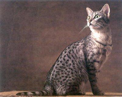 Turi godā savu pagātni  to... Autors: Fosilija Mūsu mīļie kaķi 2.daļa
