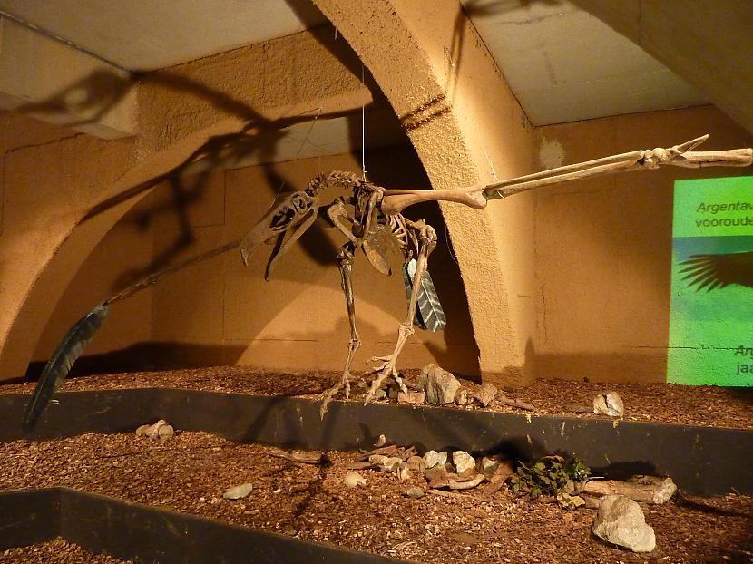 Argentavis magnificens Autors: Fosilija Daži krutākie zīdītāji un putni