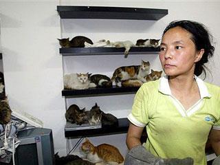 Katru dienu tiek apēsti pie... Autors: Shanta Tiek glābti dzīvnieki Ķīnā un Japānā..