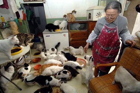 Šī sieviete gados ir kaķu... Autors: Shanta Tiek glābti dzīvnieki Ķīnā un Japānā..
