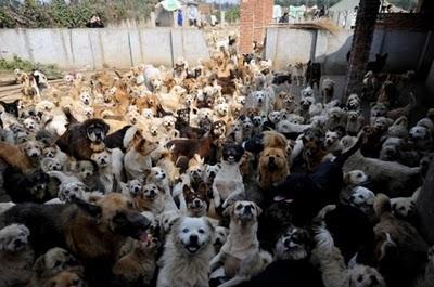 Šīs nevainīgās dvēselītes ir... Autors: Shanta Tiek glābti dzīvnieki Ķīnā un Japānā..