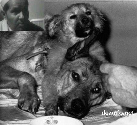 Demihovs skaidroja ka suņi... Autors: exe Dīvainākie eksperimenti pasaules vēsturē.