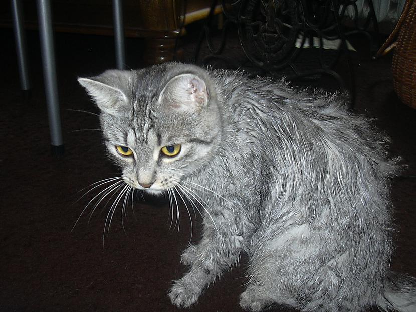 Tādēļ kaķus var likt vannoties... Autors: tavs kaimins Mīluļi :*