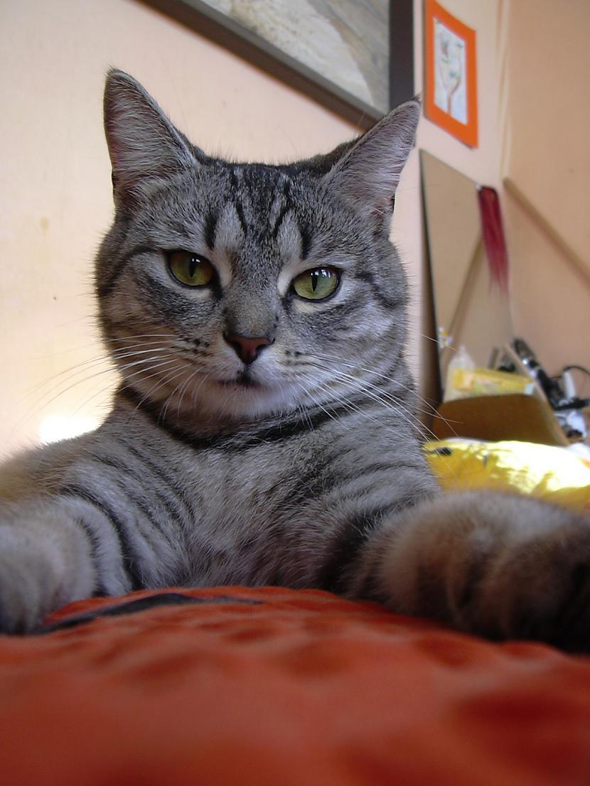Ja tavam kaķim ir 3 gadi  tad... Autors: tavs kaimins Mīluļi :*