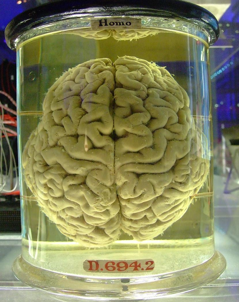 1970 gadā Roberts Heaths... Autors: exe Dīvainākie eksperimenti pasaules vēsturē.