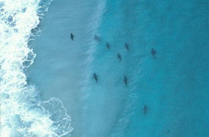 Sērfotāju paradīze atrodas... Autors: PRESS Bīstamākās pludmales pasaulē.