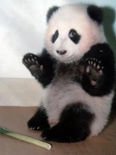 Bet tad es sapratu ka nespēju... Autors: vilx2 Pandas dzīvestāsts