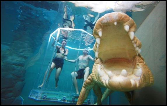Sallija Gregorija Sallie... Autors: MONTANNA Kā peldēt kopā ar krokodiliem