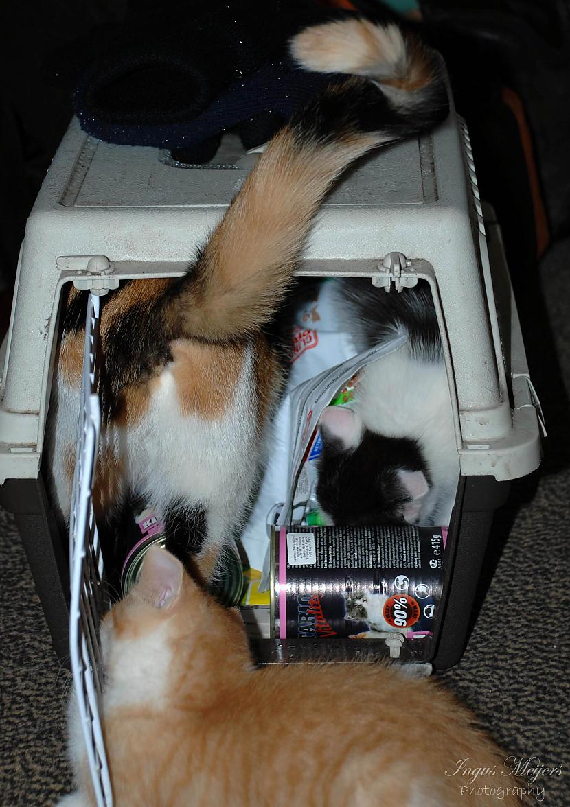 Mamma pārbaudīja vai kaste... Autors: Ungus Kaķu stāsts bildēs