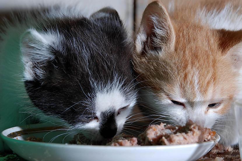 Te nu ar brāli jaunajās mājās... Autors: Ungus Kaķu stāsts bildēs