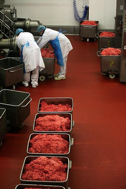 Kad gaļa ir samalta to nogādā... Autors: Nāriņš Kā taisa gaļu burgeriem, kuri nonāk McDonaldā