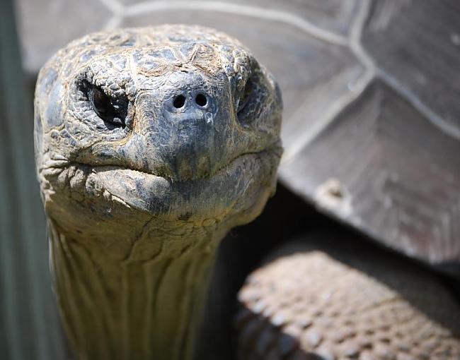 Bruņurupuči uz zemes dzīvo jau... Autors: 6luks Bruņurupuči