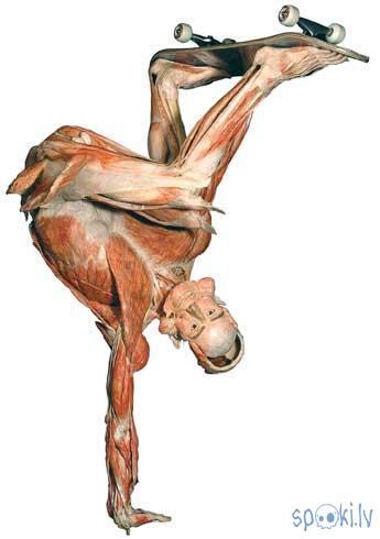 Autors: Kadets Vācu anatoms pārdod cilvēku paliekas