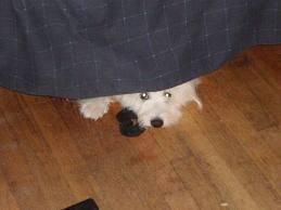 Šodien mans suns pazuda uz... Autors: Žoklis FML stāsti