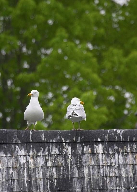 Autors: Džordžs no Džungłiem Kāpēc mēs ienīstam putnus?