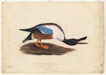 Autors: Tikher Džons Džeims Audubons