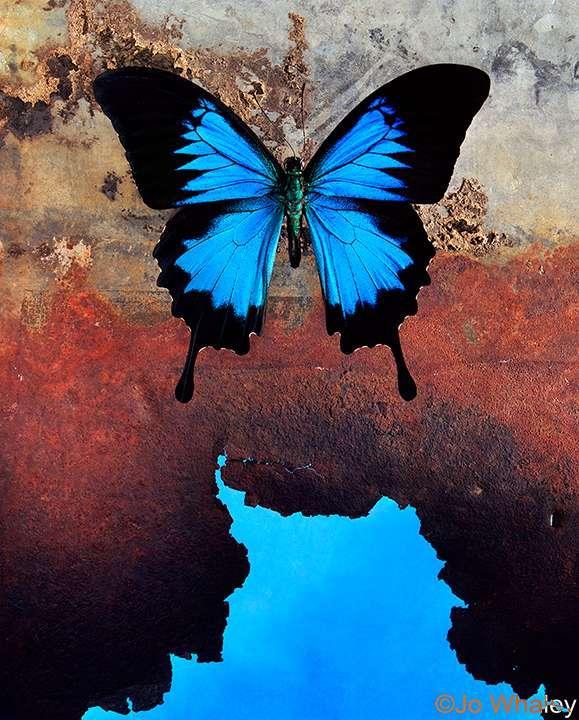 Nozīmes atšķirības vērojamas... Autors: Mijolite Krasas. Zila.