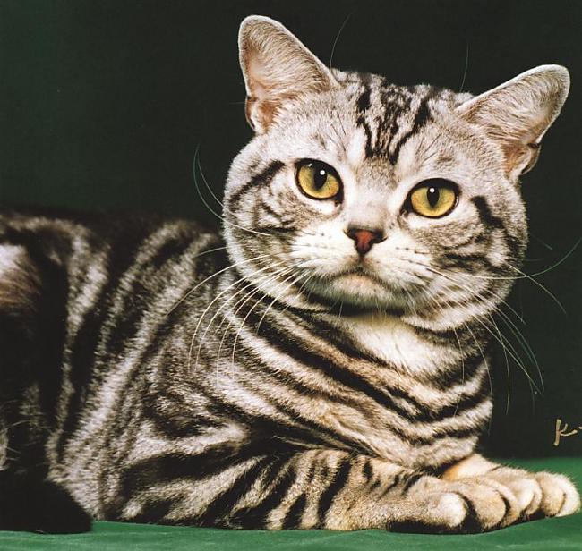Kaķi var dzirdēt ultraskaņu Autors: Trolololo Interesanti fakti