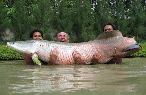 Zivis bija pirmie dzīvnieki... Autors: Fosilija 10 fakti par zivīm.