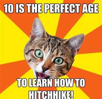 Autors: ApakšveļasAtvilktne Bad advice cat