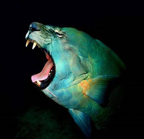 kaķzivs Autors: Fosilija mutantiskie dzīvnieki