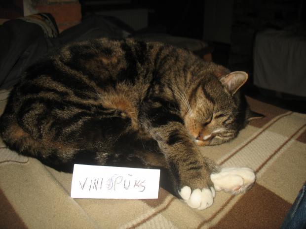 Autors: VinijsPūks mans kaķis