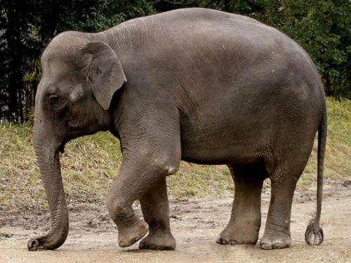 Ziloņi un cilvēki ir vienīgi... Autors: ML Neticami, bet fakts - 3