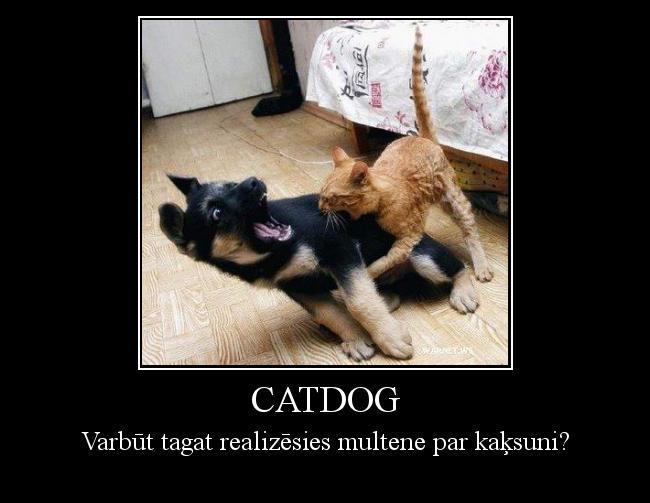Autors: Anālā Urdziņa Catdog