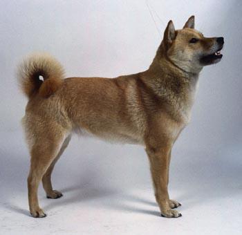 7 Suns var ieelpot un izelpot... Autors: Sidža Suņuki!