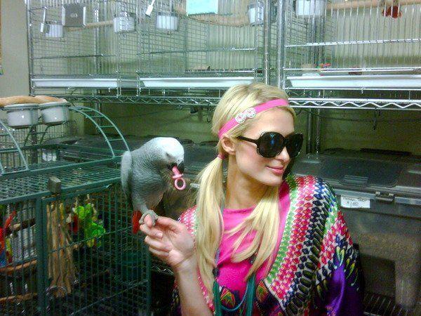 Autors: Boni Paris Hilton on Twitter