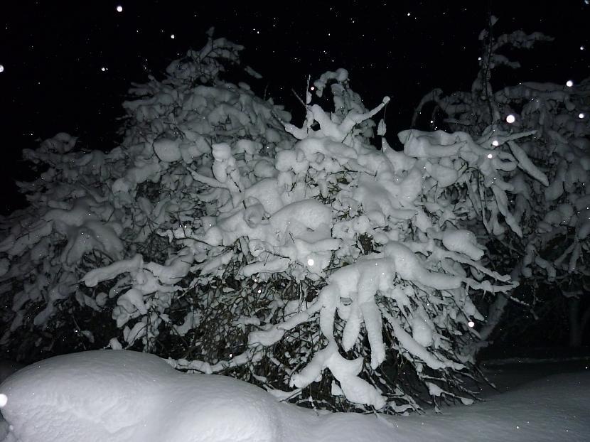 Kutkas vēl no ziemas Autors: Lantuks 1 2 3, kas tad tas? Tās ir fotkas :)