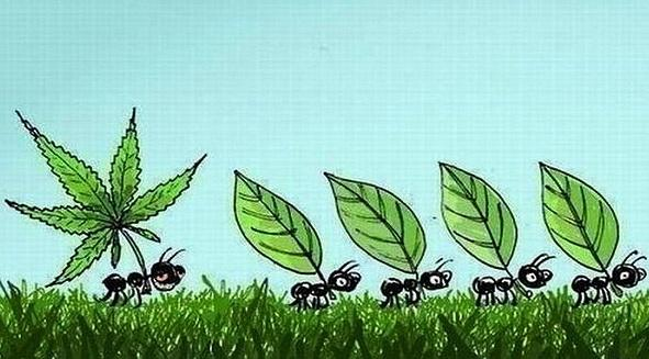 Maza karikatūra kas notiek kad... Autors: Reverss Marihuāna [lietošana, fakti u.c lietas]